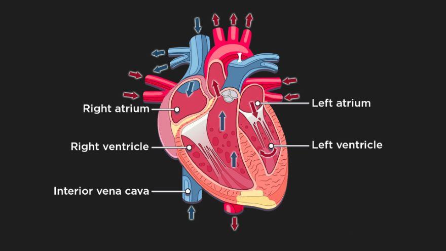 Happy Heart, Healthy Heart