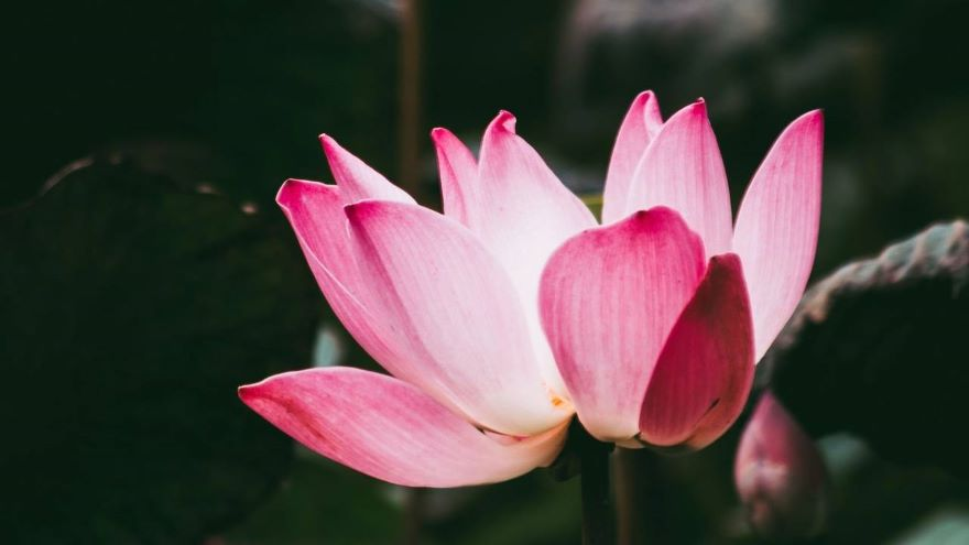 Day 4: Daily Meditation for Open to Joy