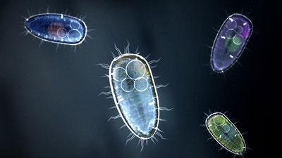 Life on Earth-Single-celled Organisms