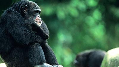 Evidence on Hominine Evolution