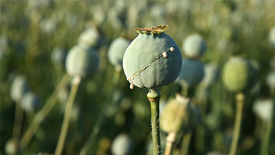 China and the Opium War