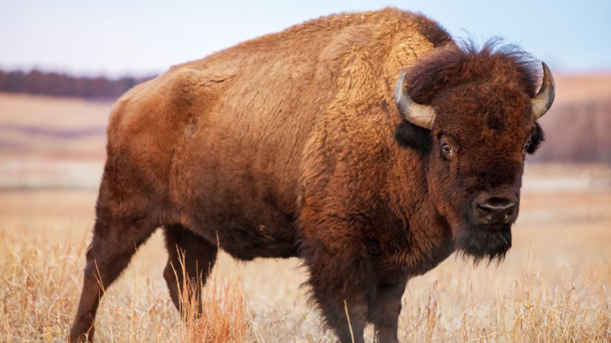 Struggles of the Plains Indians