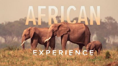The African Experience: From