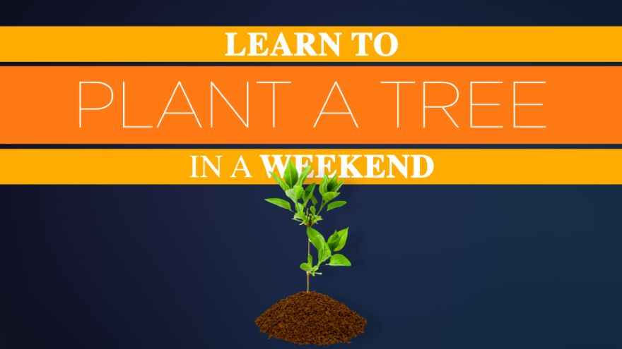 Learn to Plant a Tree in a Weekend