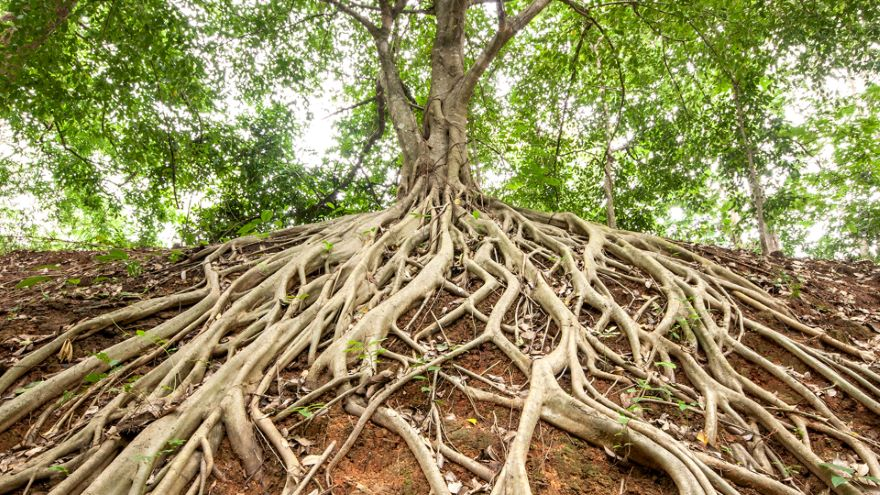 Roots and Symbiosis with Non-Plants