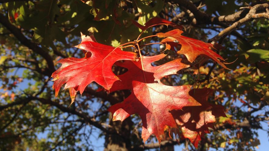 How Temperate Trees Change Color and Grow