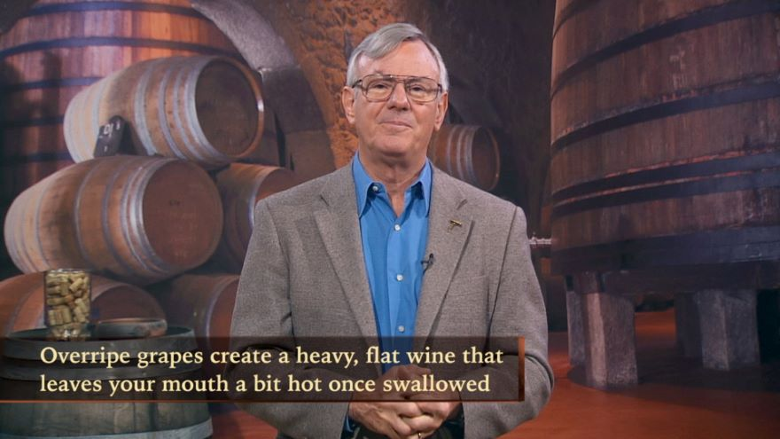 Key Elements in Wine and How to Taste Them
