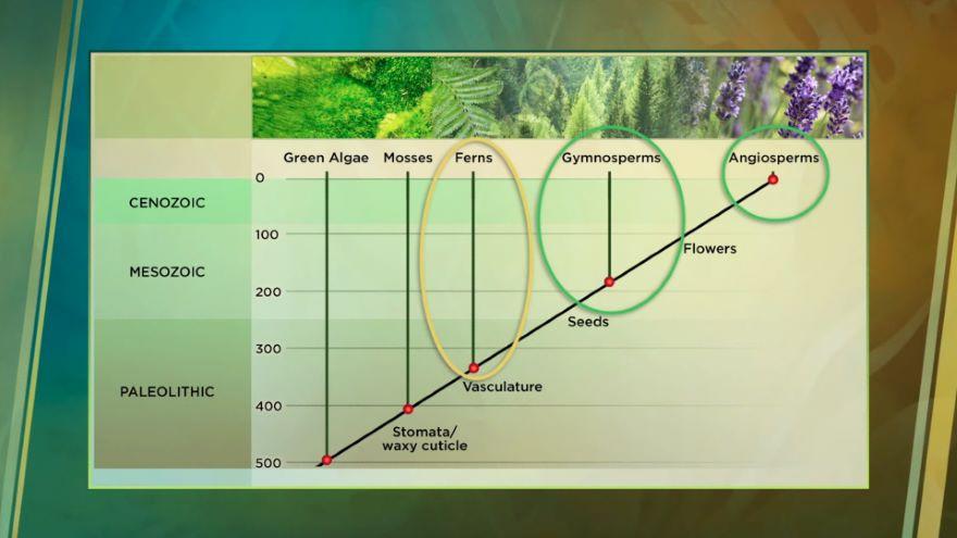 Organizing the Huge Diversity of Plants