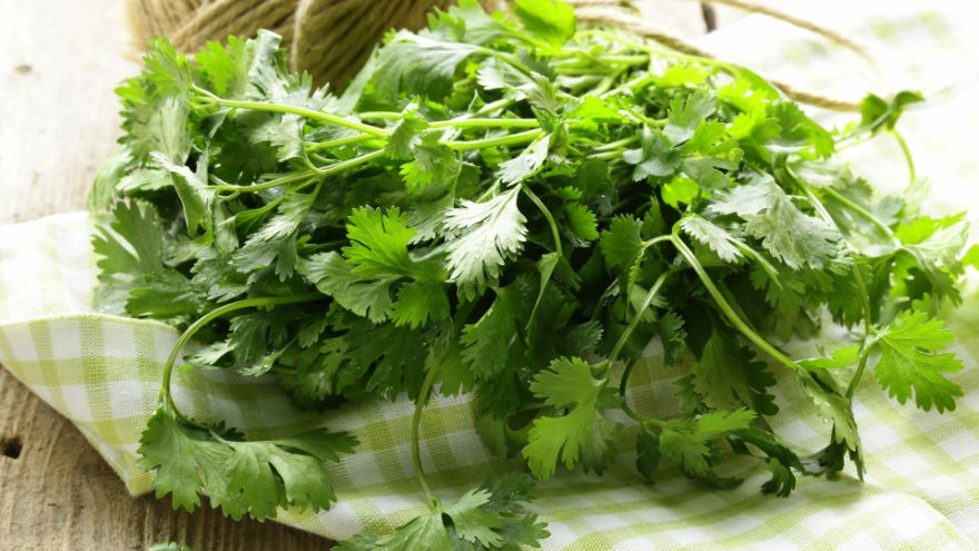 Parsley Eudicots: Plants with Umbels