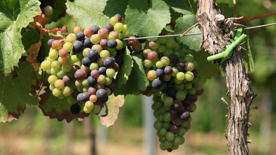 Winemaking-From Vineyard to Harvest
