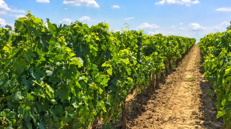 French Regions-Bordeaux and Loire