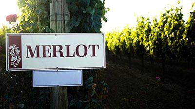 Big, Bold Reds-Cabernet Sauvignon and Merlot