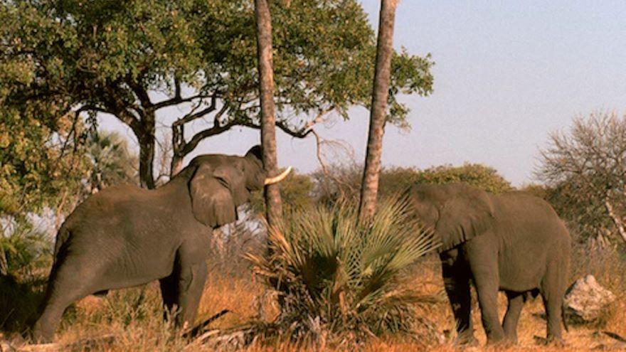 Kalahari: The Flooded Desert