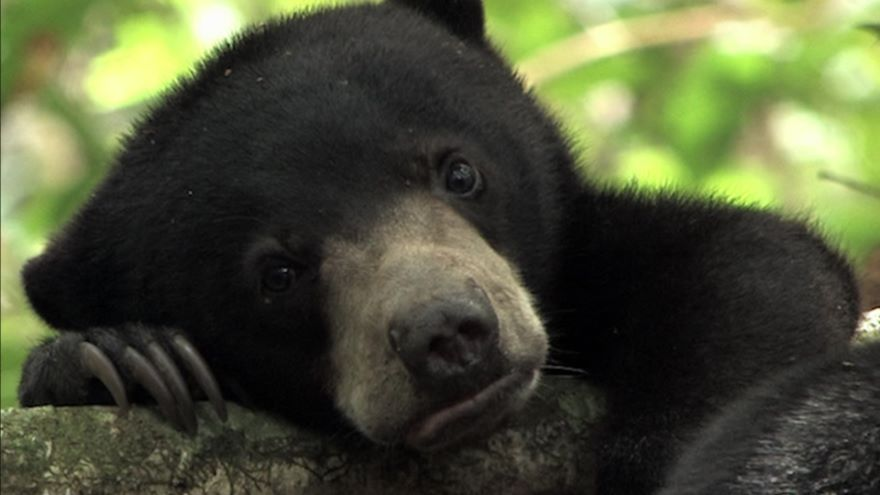 Life Is One: Growing Up Sun Bear