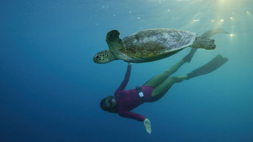 Ultimate Freedive: The Great Barrier Reef