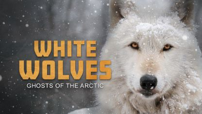 White Wolves: Ghosts of the Arctic