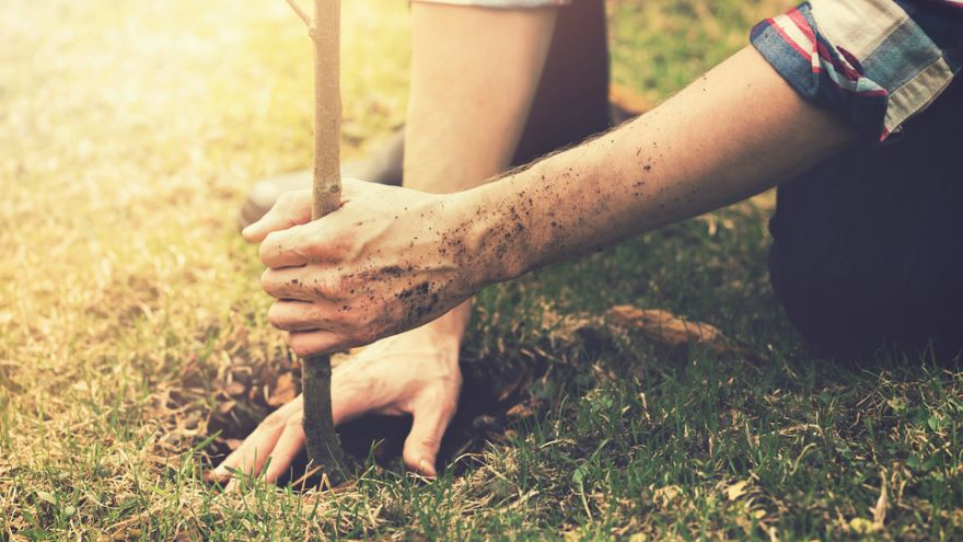 Planting for Survival