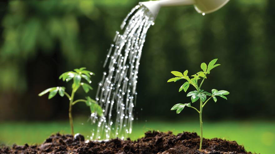 Water-Wise Landscaping