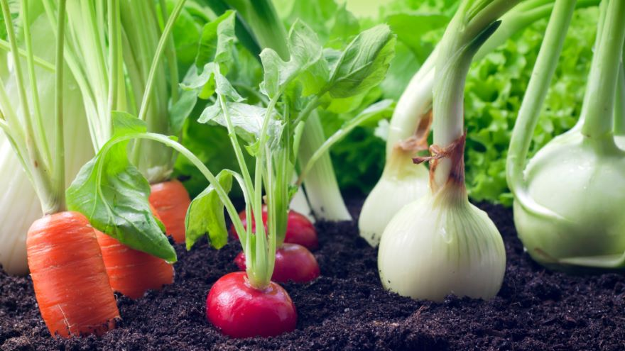 Fresh Food from Your Own Garden