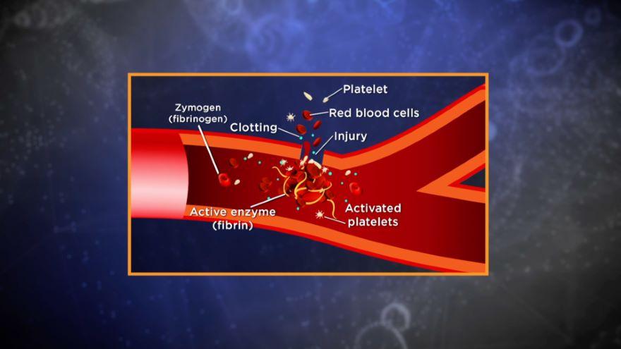 Enzyme Regulation in Cells