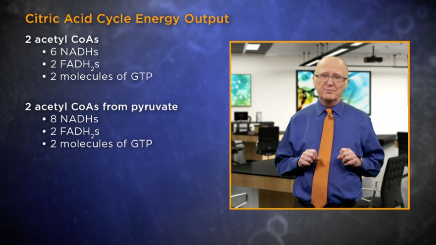 Metabolism Meets at the Citric Acid Cycle
