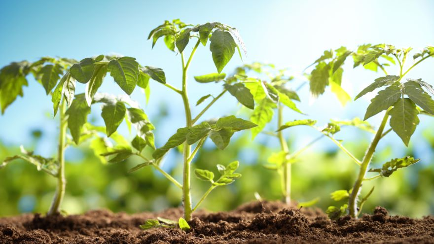 How Plants Make Carbs and Other Metabolites