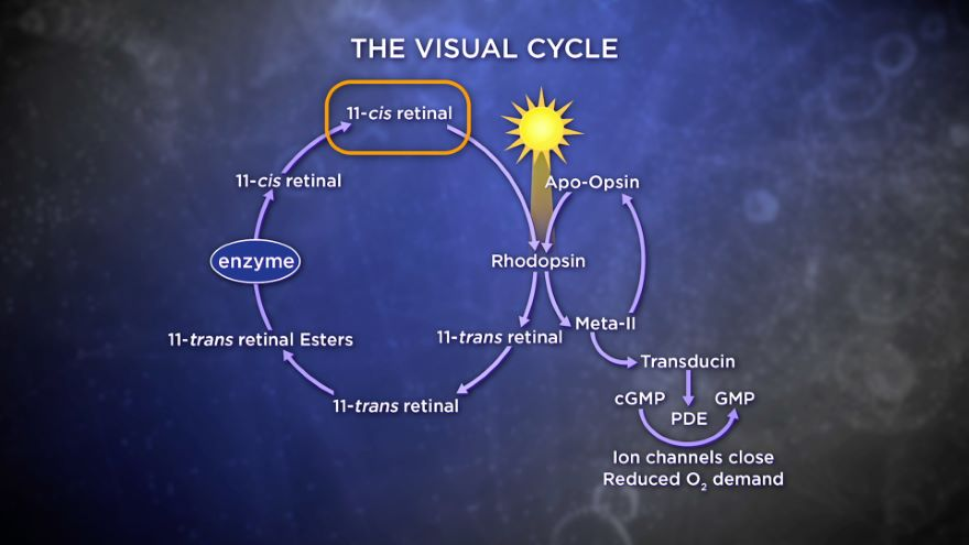 The Biochemistry of Our Senses