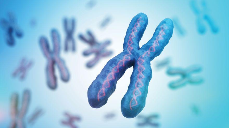 Chromosome Replication, Telomeres, Aging