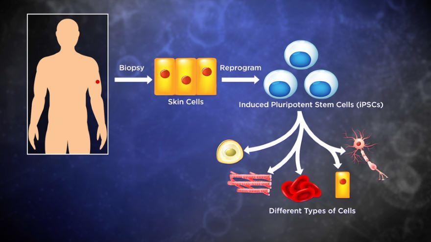 Biotechnology, Stem Cells, Synthetic Biology