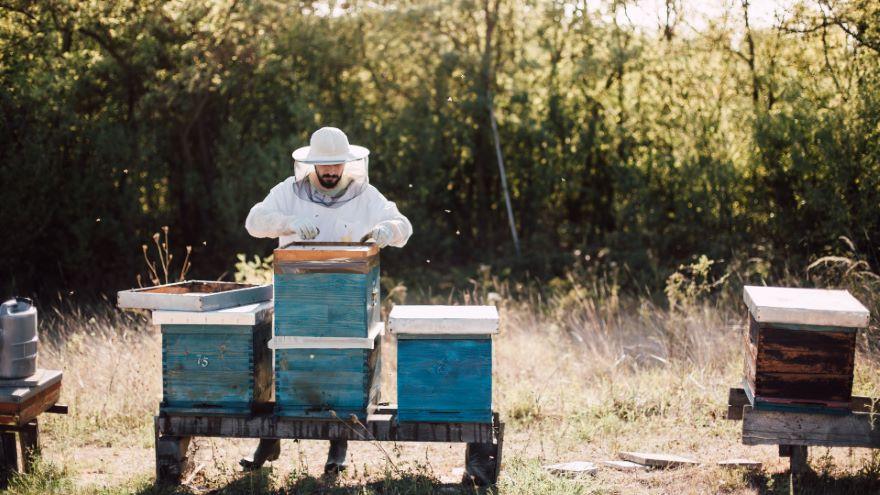 Keeping Bees and Harvesting Honey