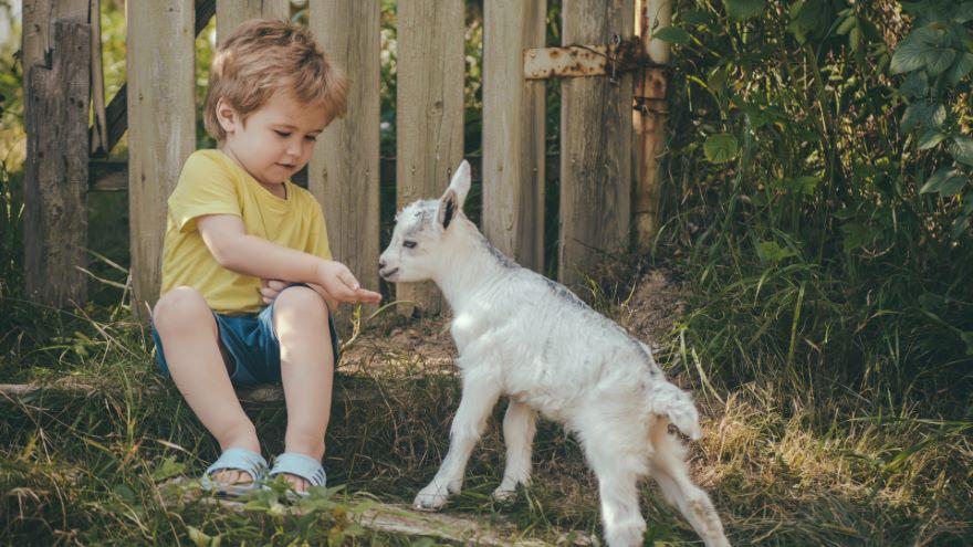 Raising Goats on Your Homestead