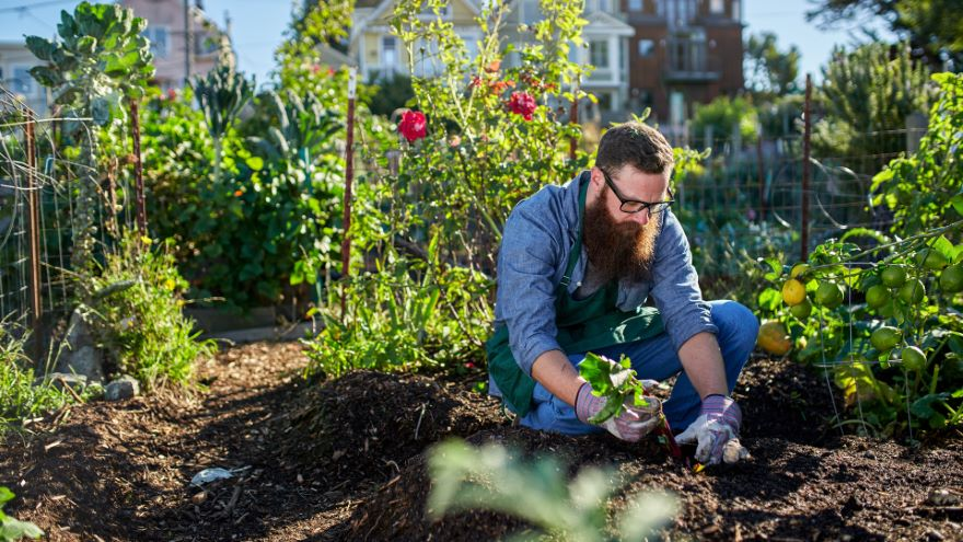 Fundamentals of Gardening and Soil