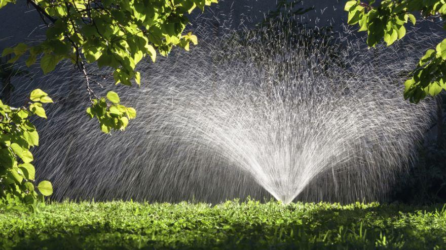 Refresh Your Summer Garden