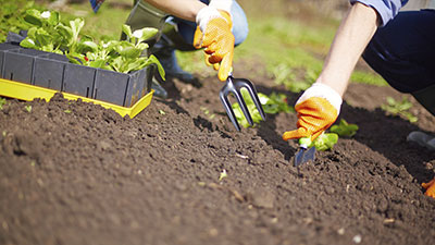 Create a New Space-Edibles and Ornamentals