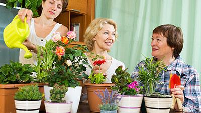Cool-Season Changes and Indoor Gardens