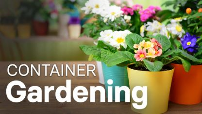 How to Grow Anything: Container Gardening Tips & Techniques