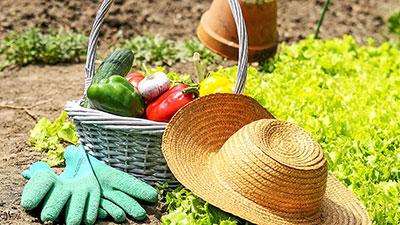 Planning for Gardening Success