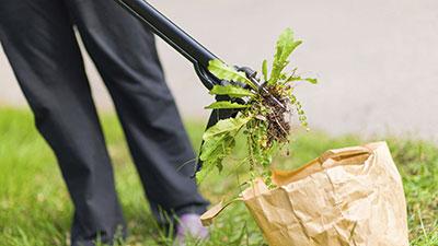 Low-Maintenance Garden Tips