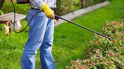 Eco-Friendly Pest Management