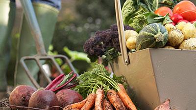 Food Harvesting Tips and Tricks