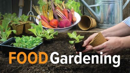 How to Grow Anything: Food Gardening for Everyone