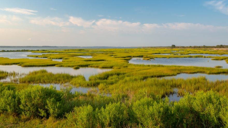 The Tidewater South: America's Birthplace