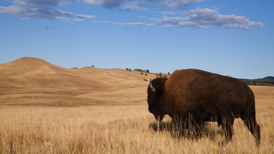 The Black Hills: Nature and Native Heritage